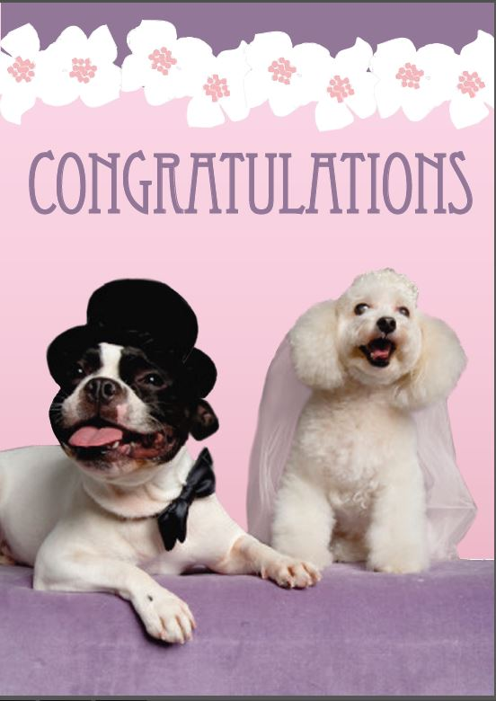 Congratulations funny dog