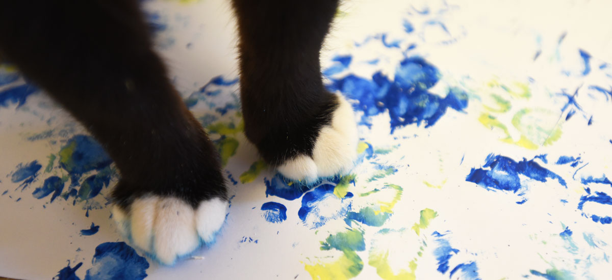 Using animal-safe paint, Sanctuary animals are using their paws (and hooves) to exercise their own sense of creativity.