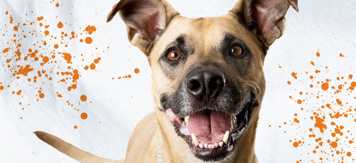 Help make dreams come true by covering an adoption fee.