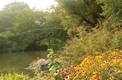 Gapstow Bridge, The Pond (Summer)