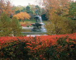 Bethesda Fountain (Fall) 2