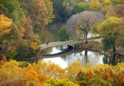 Bow Bridge fall