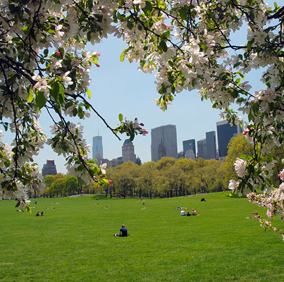 Sheep Meadow in Spring