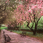 Click here for more information about Conservatory Garden (Spring) 1