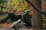 Click here for more information about The Ravine (Fall)