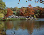 Click here for more information about The Lake (Fall)