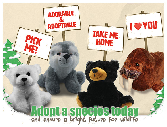 Adoption banner with plush toys