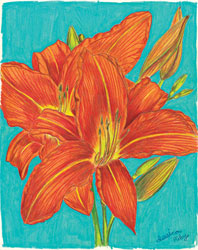 'Orange Lilies That Grow At My House' by Jessica Riley