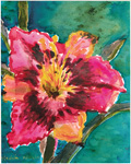 Bright Rose Daylily, by Virginia Phillips