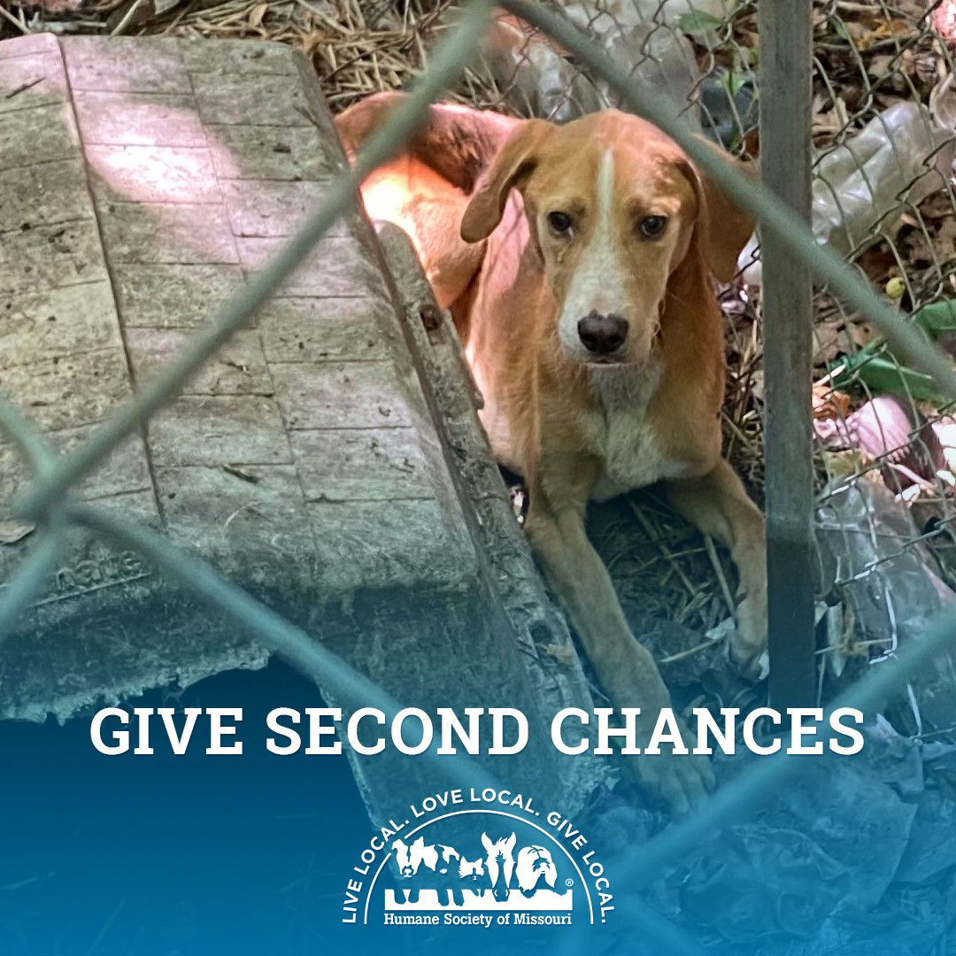 Give Second Chances