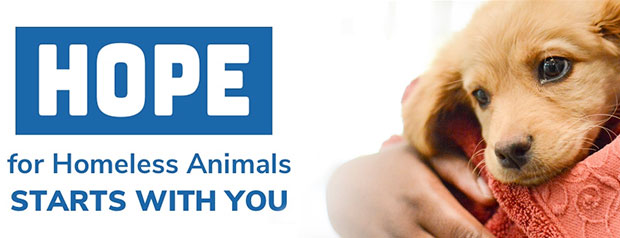 hope for homeless animals starts with you