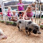 Click here for more information about Farm Animal Friends Animal Adventure Camp! - Ages 6+ at Longmeadow Rescue Ranch **TRANSPORTATION NOT INCLUDED**