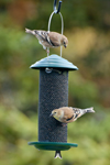Click here for more information about Nyjer/Thistle Feeder