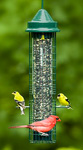 Click here for more information about Squirrel Buster Classic Feeder