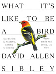 Click here for more information about What It's Like to Be a Bird by David Allen Sibley