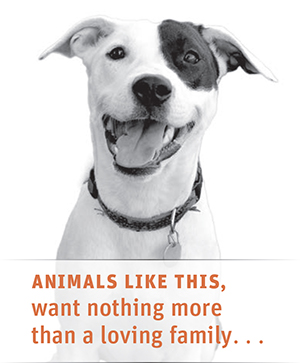 humane society slogans | just b.CAUSE