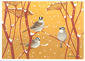 card---holiday-card-White-crowned-Sparrows-290.jpg