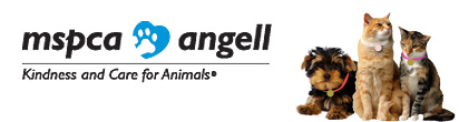 support the pet care assistance fund   mspca angell
