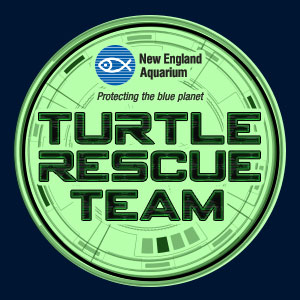 Turtle Rescue Team