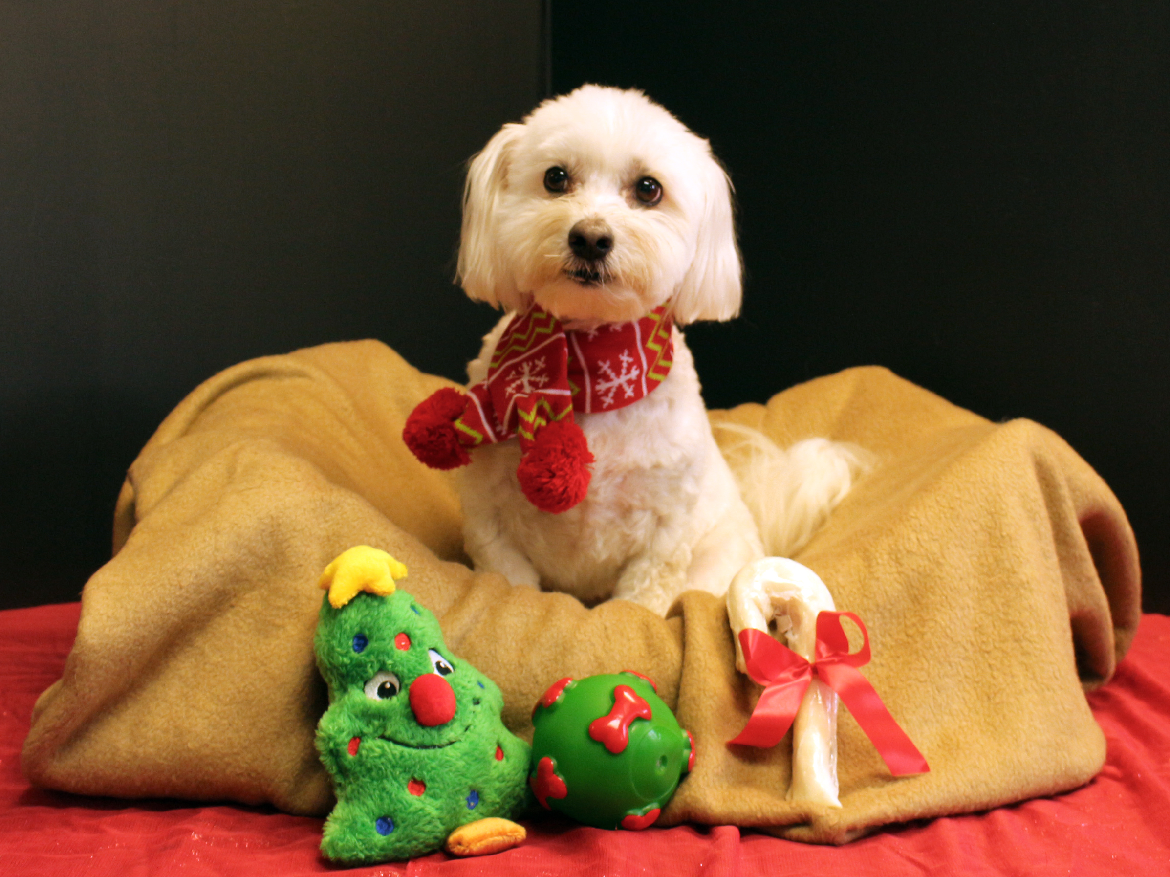 bailey w scarg and toys.jpg