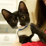 Click here for more information about Holiday - Kitten Care Kit