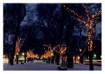 Click here for more information about Holiday Cards - Holiday Lights