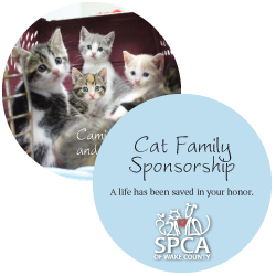 Cat Family Holiday Sponsorship Package