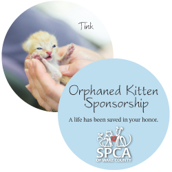 Orphan Kitten Holiday Sponsorship Package