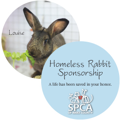 Rabbit Sponsorship Package