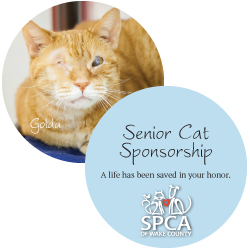 Senior Cat Sponsorship Package