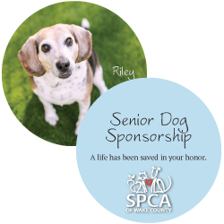 Senior Dog Sponsorship Package
