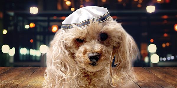 bark mitzvah (1).jpg