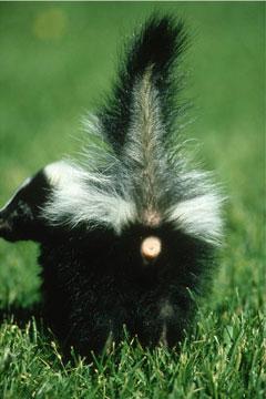Wildcare Wildcare July Enews