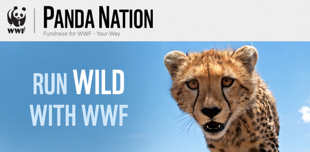 Run Wild with WWF | Cheetah