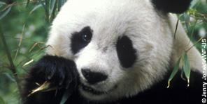 panda renewals 1012